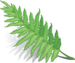Fern Property Management